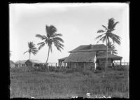 Houses and palms on the beach