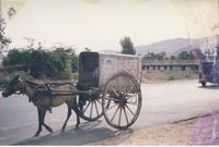 Donkey-drawn carriage
