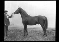 Man showing a horse