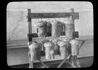 Shorn sheep's wool