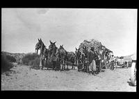 Mule wagons transporting wool