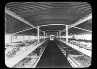 Warehouse of cattle bones