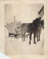Horses and sled