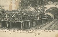 Banana Platform, San Pedro (Honduras)