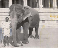 Unidentified man with elephant