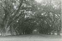 Oak Alley Plantation House, Vacherie, St. James Parish, LA