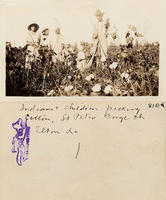 Indians and children picking cotton